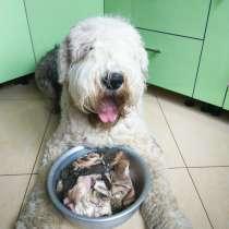 Мясо для собак (Рубец, фарш, ассорти), в Серпухове