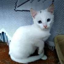 Белые котята, отдам в добрые руки, в дар, в Москве