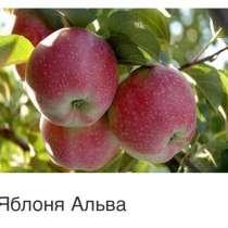 Саженцы плодовых ягодных и декоративных культур, в Балашове