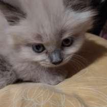 Отдам бесплатно котят, в Голицыне