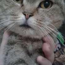 Котята, в Мичуринске