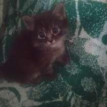 Котёнок в добрые руки, в Новочебоксарске