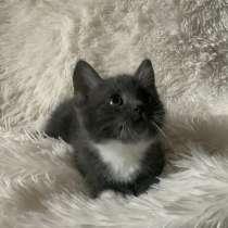 Милые котята в дар, в г.Брест