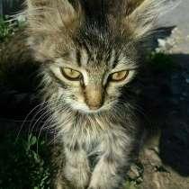 Отдам котят в хорошие руки, в г.Костанай