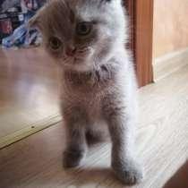 Котенок ищет дом, в г.Полоцк