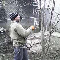 Подрезка фруктовых деревьев в Донецке, в г.Донецк