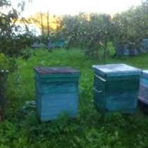 Продам пчелосемьи, в Белгороде