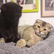 Verkaufe BKH Kitten, в г.Ohlsbach