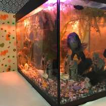 Продам аквариум, в Тамбове