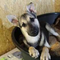 Умный щенок, который вырастет небольшим, в Санкт-Петербурге