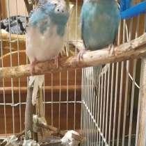 Пара попугаев, в Волжский