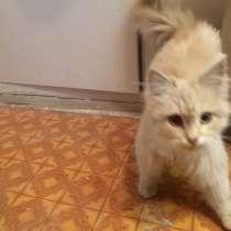 Отдам котенка, в Ульяновске