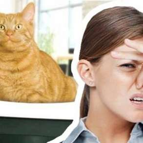 Удаление запахов от животных. Озонирование помещений, в Тюмени
