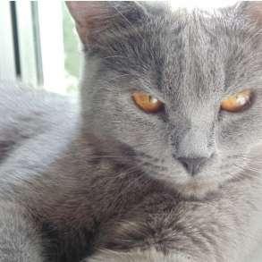 Котята, в Ижевске