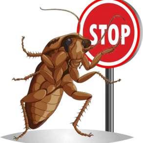 Травля насекомых, дезинсекция, в Новокузнецке
