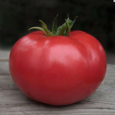 Семена розового томата Kibo F1 / Кибо F1 (Китано)