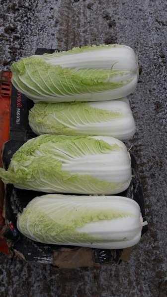 Продам лук на перо в Ростове-на-Дону фото 7