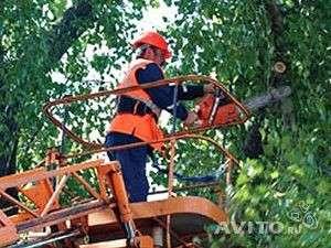 Обрезка, вырубка деревьев