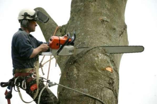 Спил, валка, удаление деревьев