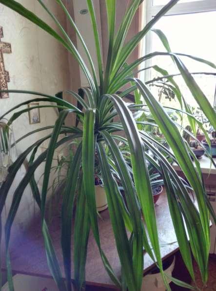 Растения для дома и офиса в Новосибирске фото 20