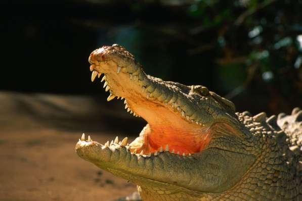 05.11.16 Автобусный Тур На Крокодиловую Ферму + Зоопарк