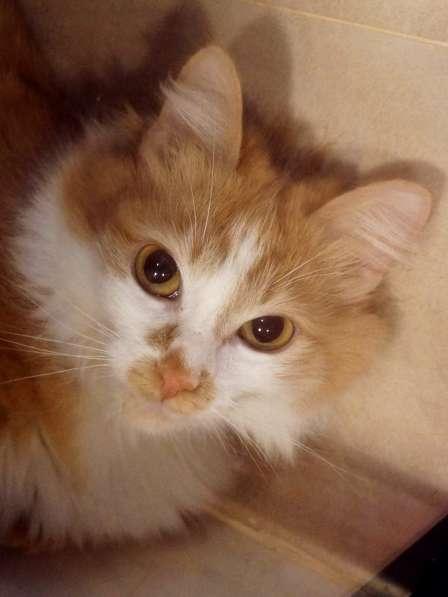 Чудесная кошка ищет семью в Москве фото 6