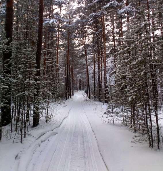 Участок с лесом в Красноярске