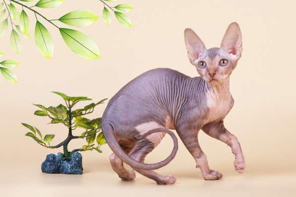 Бархатный котёнок с чувственной душой. в фото 3