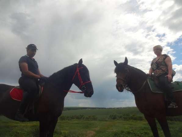 Прогулки на лошадях в Воронеже