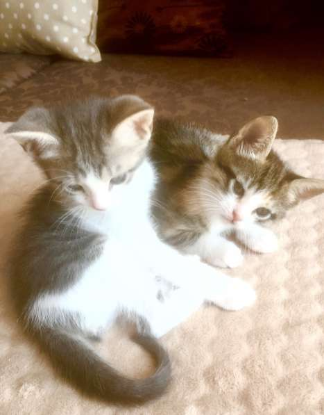 Котята. Домашние в фото 4