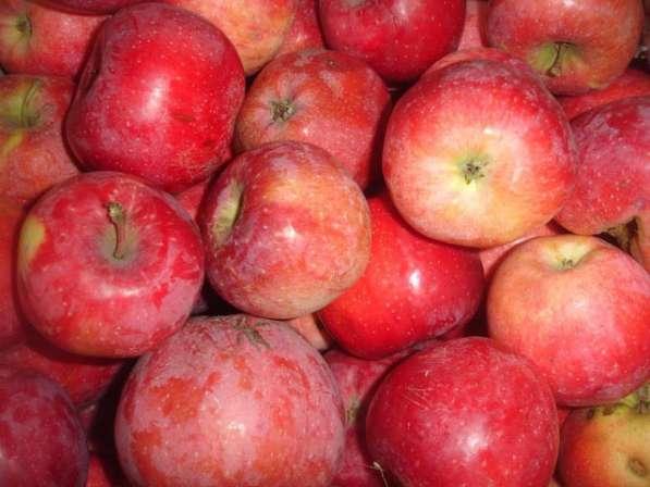 Продам очень вкусные яблока в/с