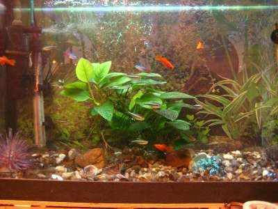 СРОЧНО !!! 2 аквариума действующих