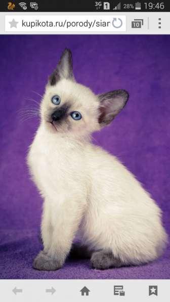 Элитный котенок