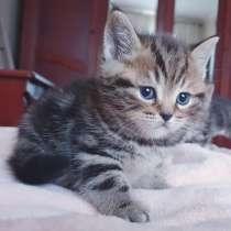 Котики в модных шубках, в г.Минск