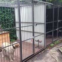 Зоогостиницы для животных на КМВ, в Пятигорске