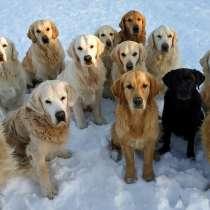 Помощница в питомник собак, в Киржаче