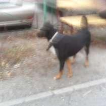 Отдам собаку в добрые руки, в Челябинске