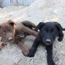 Ищем дом для красивых щенков, в г.Луганск