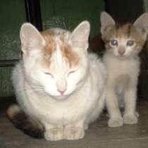 Котята от кошки - мышеловки, в Москве