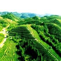 Поставка чая из Китая - договорная цена сертификациим ЕС, в Москве
