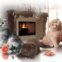 Шотландские котята серебристые и классика, в Москве