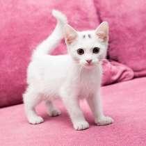 Маленькое чудо Яшенька, милейший белоснежный котенок в дар, в г.Москва