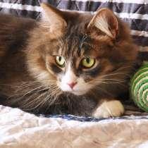 Сибирский красавец пушистый кот Кузя ищет дом, в г.Москва