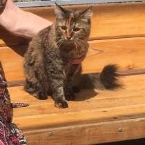 Кошечка Пуша, в Анапе