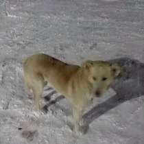 Милый пёс Шарик - Добрым Людям !, в г.Кокшетау