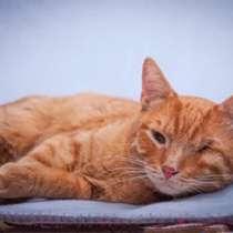 Добрейший солнечный молодой котик Рыжик ищет дом, в г.Москва