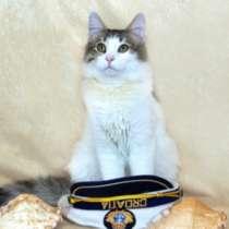 Отдам даром Веселый озорник Тоша, чудесный котик, в г.Москва