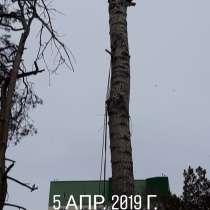 Спил деревьев, в Новосибирске