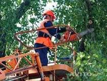 Обрезка, вырубка деревьев, в Тюмени