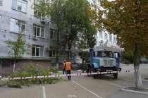 Спил, удаление и вырубка опасных деревьев, в Белгороде
